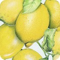 Featured image AMKD-19303-137 LEMON