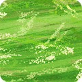 Featured image SRKD-20308-7 GREEN